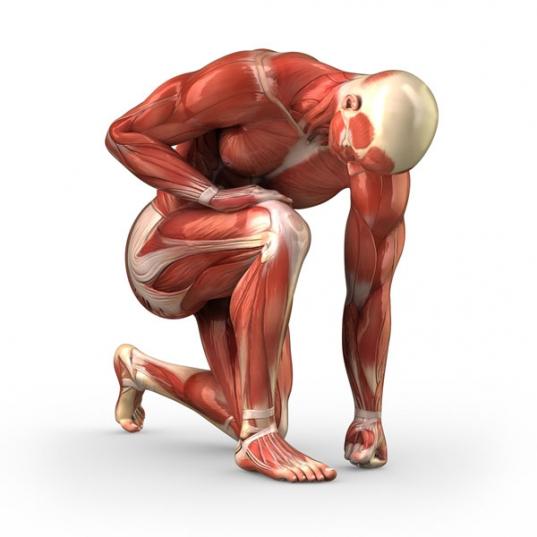 El Trivial de los músculos